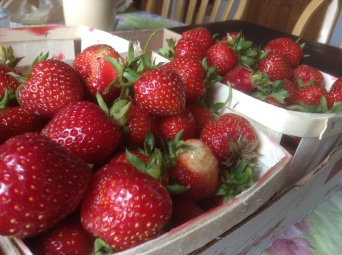 Strawberries I picked in Nova Scotia