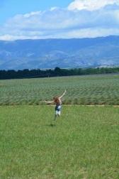 Lavender fields in Gorges du Verdon