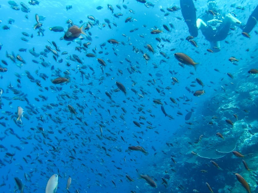 Diving in Flores