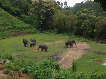 elephant-jungle-sanctuary