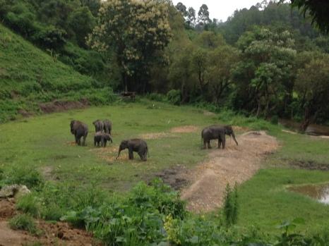 elephant-jungle-sanctuary